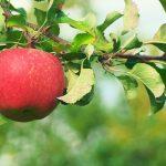 藤沢 美容院 美容室 ヘアサロン リンゴ幹細胞培養液 トリートメント